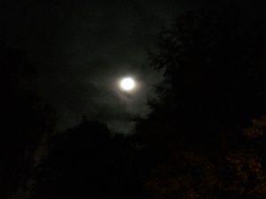 Avkopplande löpning i månens sken