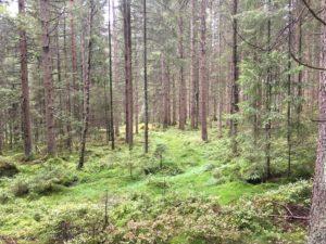 Andas i skogen