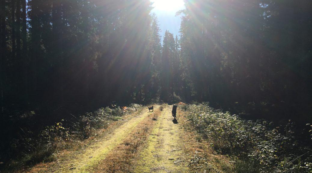Skogen, höst