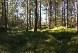 orörd skog